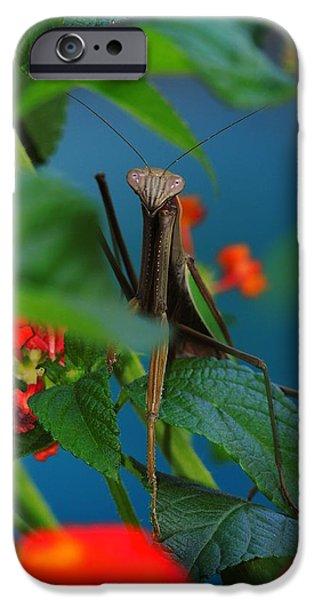 Praying Mantis iPhone Case by Raymond Salani III