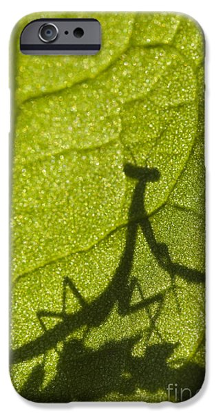 Mantodea iPhone Cases - Praying Mantis Silhouette Behind a Leaf iPhone Case by Brandon Alms
