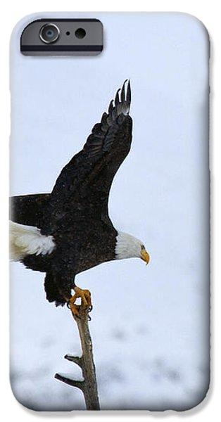 Precarious Perch iPhone Case by Mike  Dawson