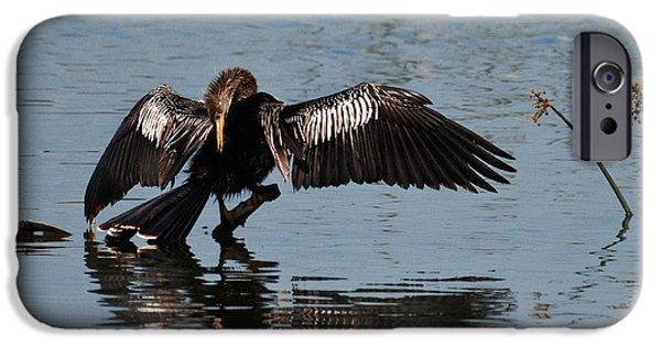 Anhinga iPhone Cases - Preening Anhinga iPhone Case by Dawn Currie
