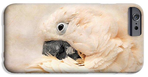 Cockatoo iPhone Cases - Preening iPhone Case by Jai Johnson