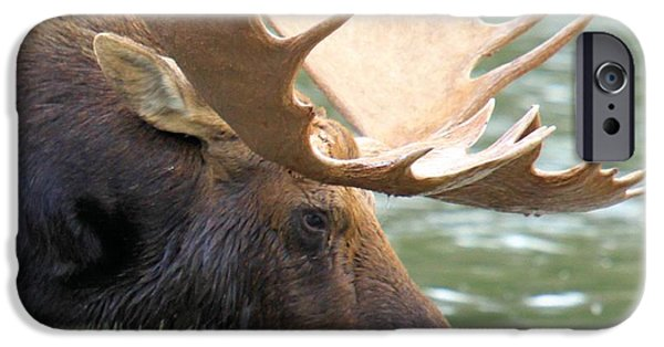 Moose In Water iPhone Cases - Preparing To Dunk iPhone Case by Adam Jewell