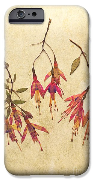 Fuchsia iPhone Cases - Pressed Fuchsia Flowers iPhone Case by Jan Bickerton