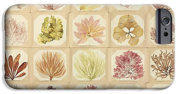 Alga iPhone Cases - Pressed Seaweed Specimens iPhone Case by Natural History Museum, London