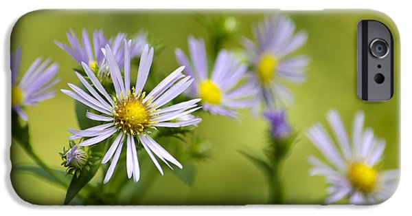 Fall iPhone Cases - Pretty Aster Flowers iPhone Case by Christina Rollo