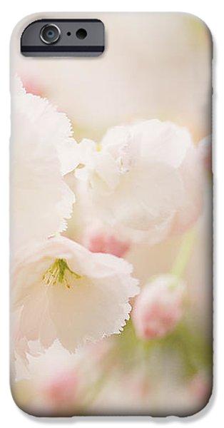 Pretty Blossom iPhone Case by Natalie Kinnear