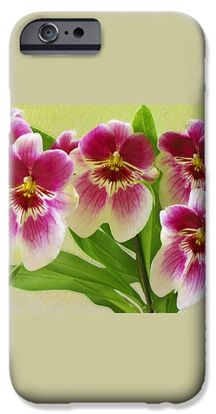 Pretty Faces - Orchid iPhone Case by Ben and Raisa Gertsberg