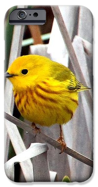 Pretty Little Yellow Warbler iPhone Case by Elizabeth Winter
