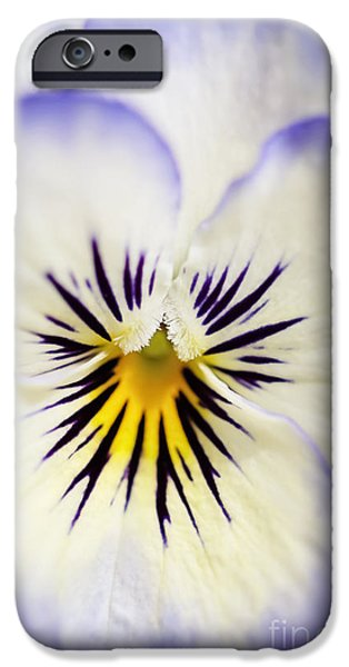 Pretty Pansy Close Up iPhone Case by Natalie Kinnear
