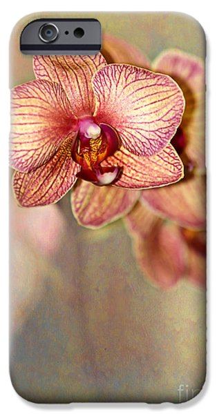 Floral Photographs iPhone Cases - Pretty Peach Phalaenopsis Orchids iPhone Case by Sabrina L Ryan