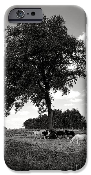 Pony iPhone Cases - Pretty Ponies under a Tree iPhone Case by Olivier Le Queinec