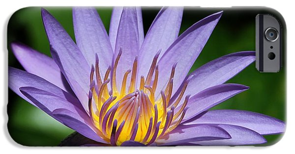 Florida Flowers Photographs iPhone Cases - Pretty Purple Petals iPhone Case by Sabrina L Ryan