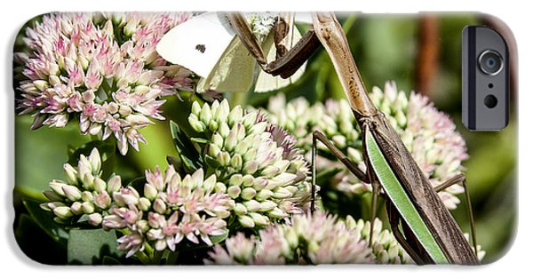 Butterfly Prey iPhone Cases - Preying Mantis 3 iPhone Case by Lance Theroux