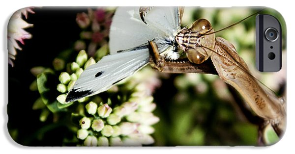 Butterfly Prey iPhone Cases - Preying Mantis 6 iPhone Case by Lance Theroux