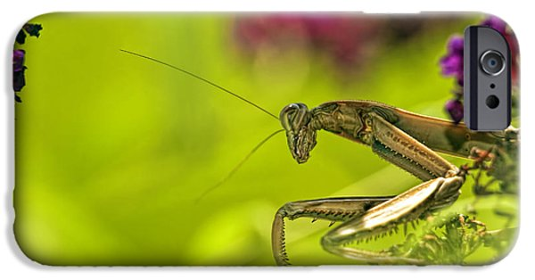 Butterfly Prey iPhone Cases - Preying mantis iPhone Case by Geraldine Scull