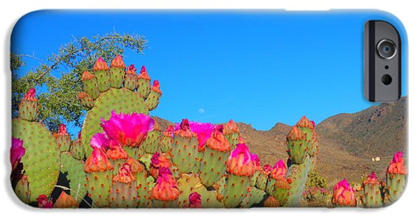 Freedom iPhone Cases - Prickly Pear Blooming iPhone Case by James Welch