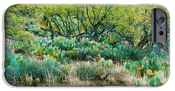 Pears iPhone Cases - Prickly Pear Cacti Surrounds Mesquite iPhone Case by Panoramic Images