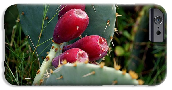 Harsh Conditions iPhone Cases - Prickly Pear Cactus iPhone Case by M E Wood