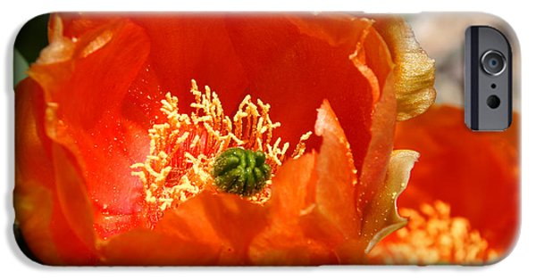 Botanical Photographs iPhone Cases - Prickly Pear in Bloom iPhone Case by Joe Kozlowski