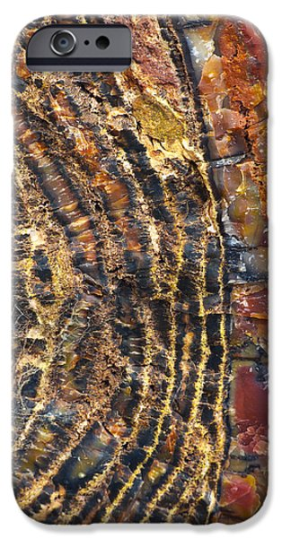 Petrified Forest Arizona iPhone Cases - Prime Cut 1 iPhone Case by Skip Hunt