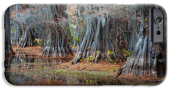 Caddo Lake iPhone Cases - Primeval Forest iPhone Case by Inge Johnsson