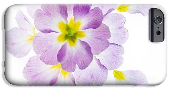 Primroses iPhone Cases - Primrose Petals 1 iPhone Case by Rebecca Cozart