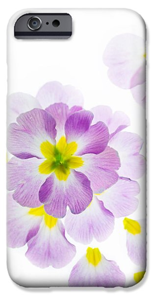 Primroses iPhone Cases - Primrose Petals 2 iPhone Case by Rebecca Cozart