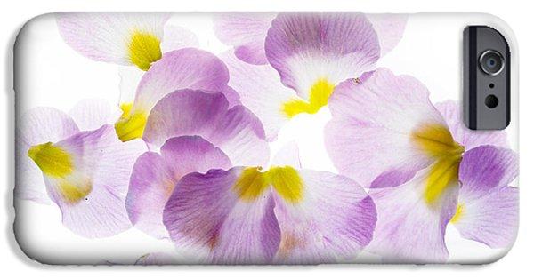 Primroses iPhone Cases - Primrose Petals 3 iPhone Case by Rebecca Cozart