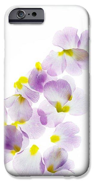 Primroses iPhone Cases - Primrose Petals 5 iPhone Case by Rebecca Cozart