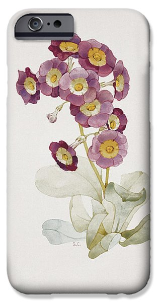 Botanical Photographs iPhone Cases - Primula Auricula Primrose iPhone Case by Sarah Creswell