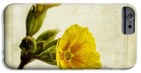 Primroses iPhone Cases - Primula Pacific Giant Yellow iPhone Case by John Edwards