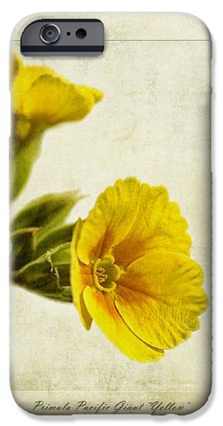 Primula Pacific Giant Yellow iPhone Case by John Edwards