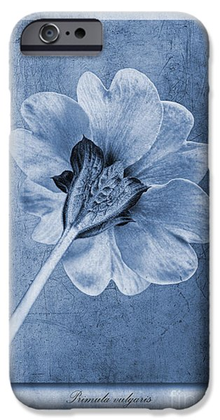 Texture iPhone Cases - Primula vulgaris Cyanotype iPhone Case by John Edwards