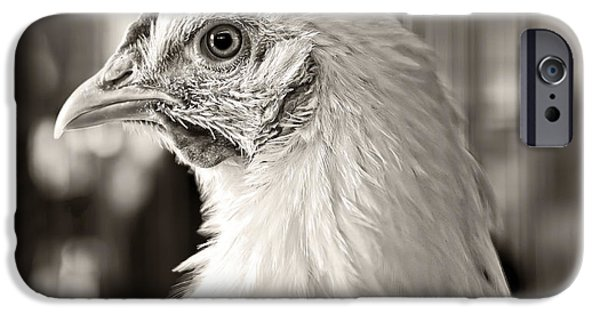 Chickens iPhone Cases - Prize Winning Hen iPhone Case by Edward Fielding