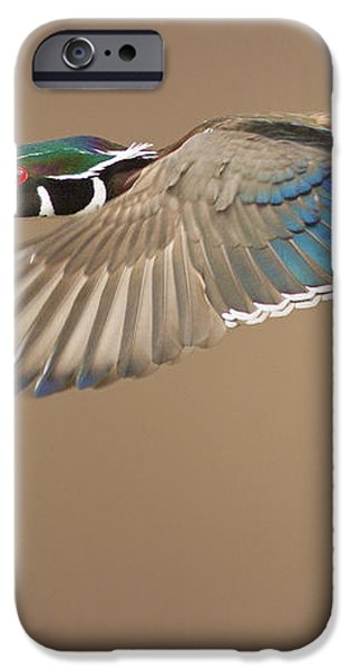 Probably the most beautiful of all duck species iPhone Case by Mircea Costina Photography