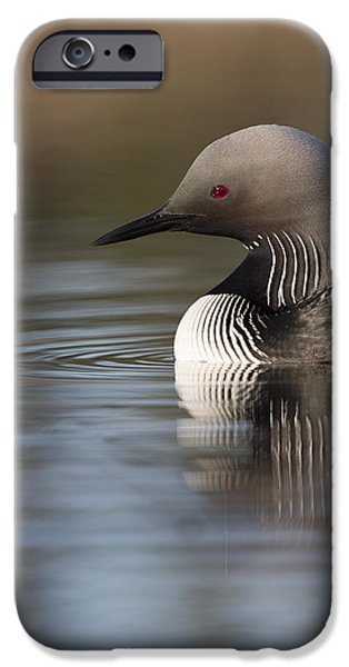 Loon iPhone Cases - Profile of a Pacific Loon iPhone Case by Tim Grams