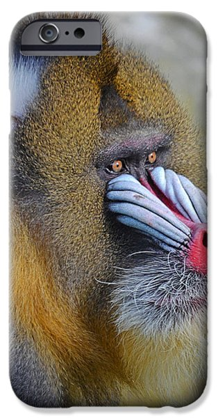 Four Animal Faces iPhone Cases - Profile Portrait of a Mandrill iPhone Case by Jim Fitzpatrick