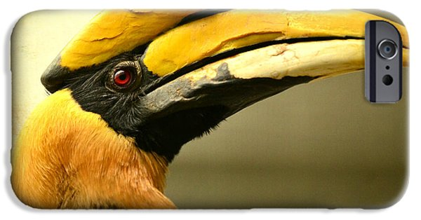 Hornbill iPhone Cases - Prolific Profile iPhone Case by Fraida Gutovich