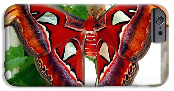 Promethea iPhone Cases - Promethea Moth iPhone Case by Amy McDaniel