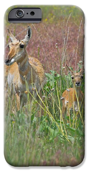 Pronghorn Doe and Fawn iPhone Case by Karon Melillo DeVega