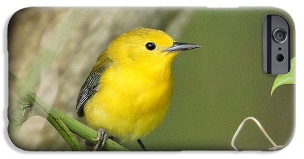 Warbler iPhone Cases - Prothonotary Warbler Close-up iPhone Case by Sandy Keeton