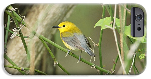 Warbler iPhone Cases - Prothonotary Warbler iPhone Case by Sandy Keeton