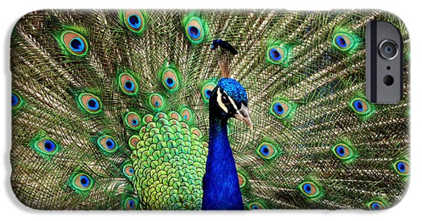 Birds Reliefs iPhone Cases - Proud  as  a peacock iPhone Case by Raphael  Sanzio