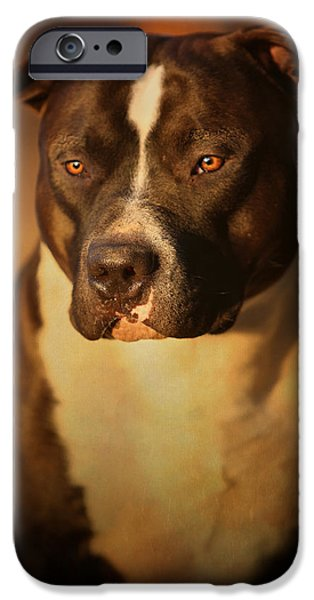 Dog Photography iPhone Cases - Proud Pit Bull iPhone Case by Larry Marshall