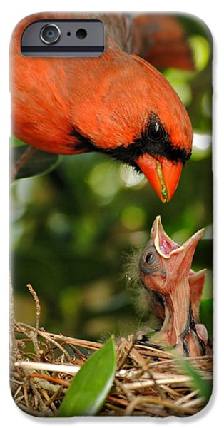 Baby Bird iPhone Cases - Provider iPhone Case by Kelly Nowak