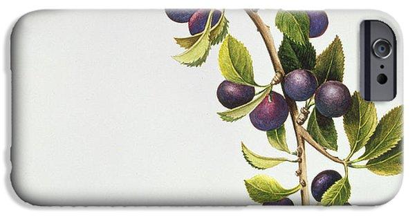 Botanical Paintings iPhone Cases - Prunus Insititia iPhone Case by Sally Crosthwaite