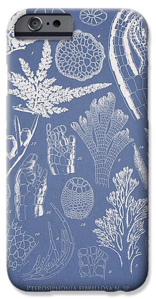 Flora iPhone Cases - Pterosiphonia fibrillosa iPhone Case by Aged Pixel