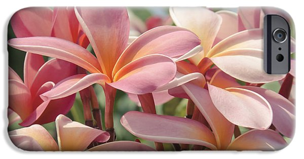 Botanical iPhone Cases - Pua Melia ke Aloha Maui iPhone Case by Sharon Mau