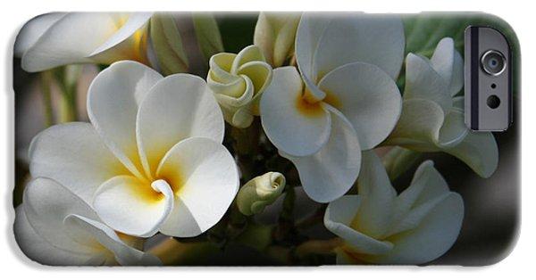 Sharon Mau iPhone Cases - Pua Melia Na Puakea Onaona Tropical Plumeria iPhone Case by Sharon Mau
