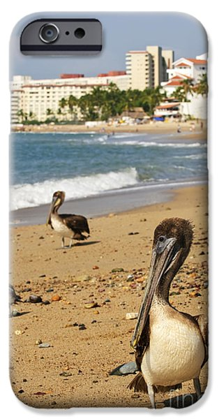 Pelicans iPhone Cases - Puerto Vallarta pelicans iPhone Case by Elena Elisseeva
